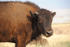 Antelope Island State Park 3