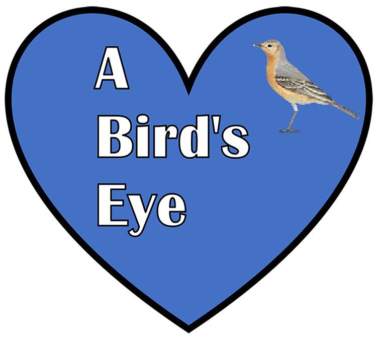 A Bird's Eye